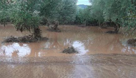 ΔΗΜΟΣ ΞΗΡΟΜΕΡΟΥ-Πρόσκληση παραγωγών που υπέστησαν ζημιές, από την έντονη βροχόπτωση της 6ης Ιουλίου.